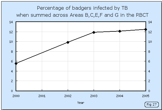 Increase in badger infection levels during the RBCT