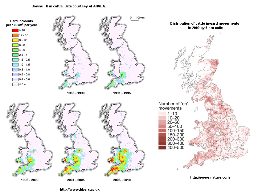 TB incidence and cattle movement maps for Great Britain.